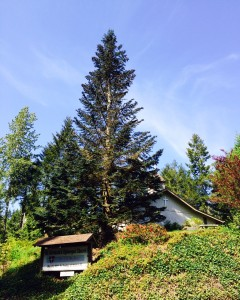 """St. Germain, the """"Church on the Hill,"""" viewed from Hwy 119 (Lake Cushman Rd.)"""